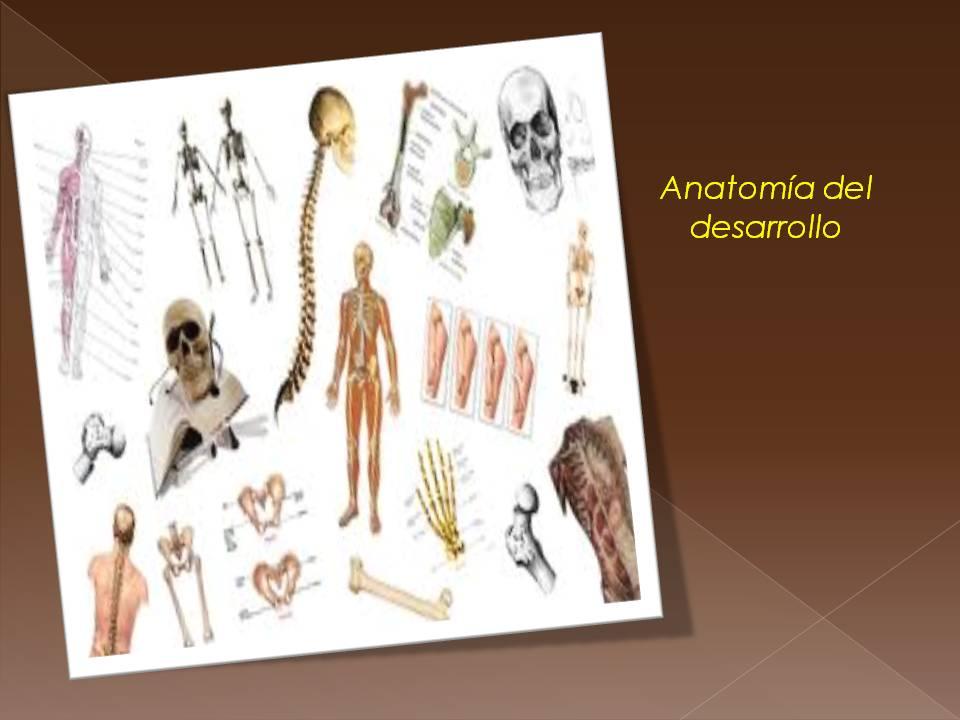 Anatomía y Fisiología humana: CONCEPTOS.