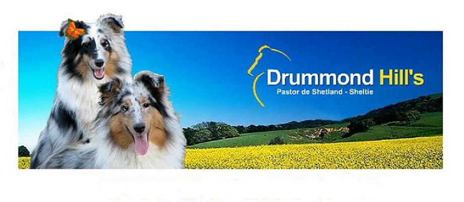 Drummond Hill´s Shelties
