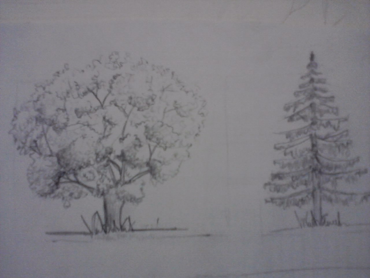 EvelynG: DIBUJO NATURAL