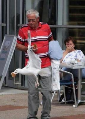 foto divertida Los ataques de gaviotas