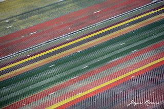 vues aériennes d'un champs de fleurs près de Bordeaux