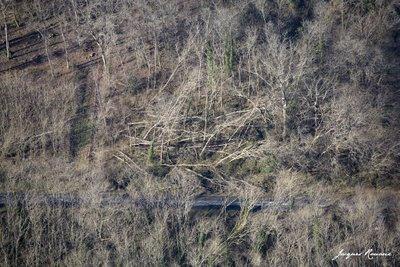 Vue aérienne d'une parcelle de forêt avec des arbres déracinés