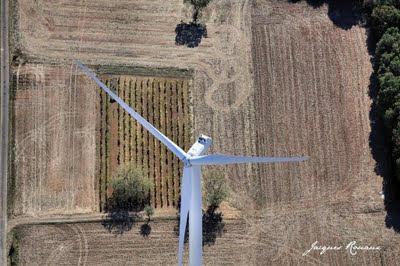 Vue aérienne d'une éolienne dans les champs de blé et rangs de vignes