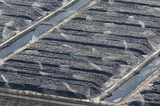 Photo aérienne d'un centre se stockage et d'arrosage de bois de pin