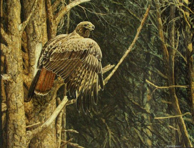 red tailed hawk painting by wildlife artist Shari Erickson