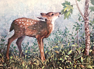black tailed deer fawn painting by wildlife artist Shari Erickson