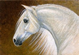 andalusian horse ACEO painting by wildlife artist Shari Erickson