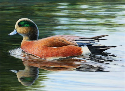 American Wigeon painting by Shari Erickson