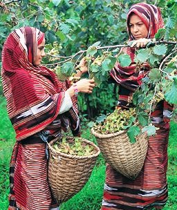 Giresun girls - Harvest