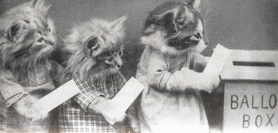 funny kittens voting at ballot box