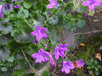 Spring flowers in October