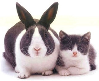 cat and rabbit coincidence