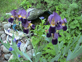 Dark tones, purple Iris