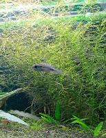 Ryby akwariowe - Wpuszczanie nowych ryb do akwarium