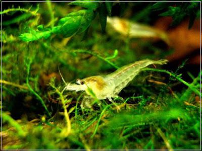 Ryby akwariowe - jfyu50
