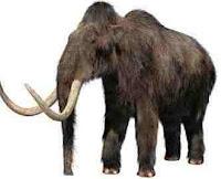 Woolly_Mammoth%5B1%5D.jpg