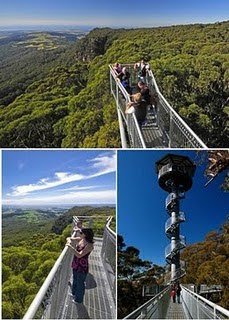 Illawara Fly Tree Top Walk