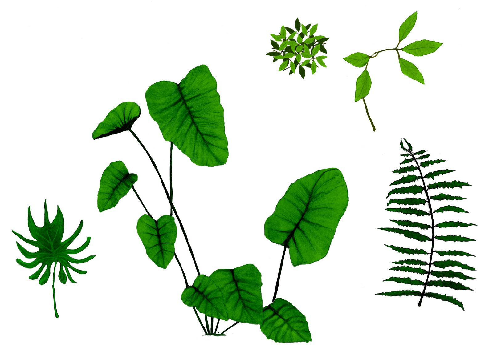 Jungle Plants Cartoon