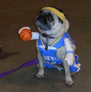 Dog Dressed Like A Football Player