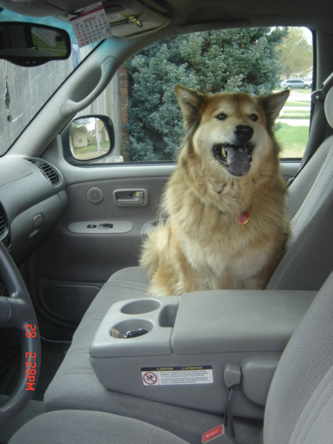 The same dog as above, seated in the passenger seat of a car, also smiling