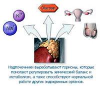 Гормоны. Лечение заикания