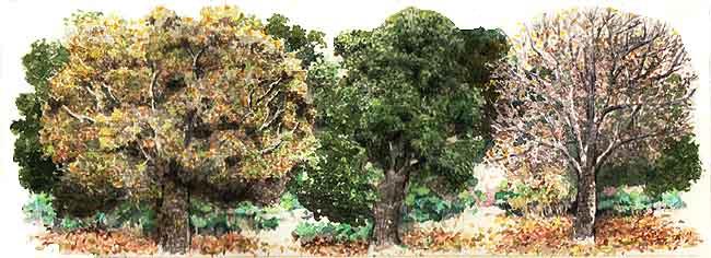 El bosque africam safari el bosque for Arboles que no se le caen las hojas en invierno