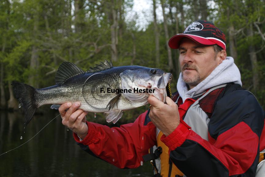 Fish r largemouth bass fish for Bass fishing websites