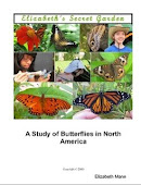 Click Picture to Buy My Butterfly Book!