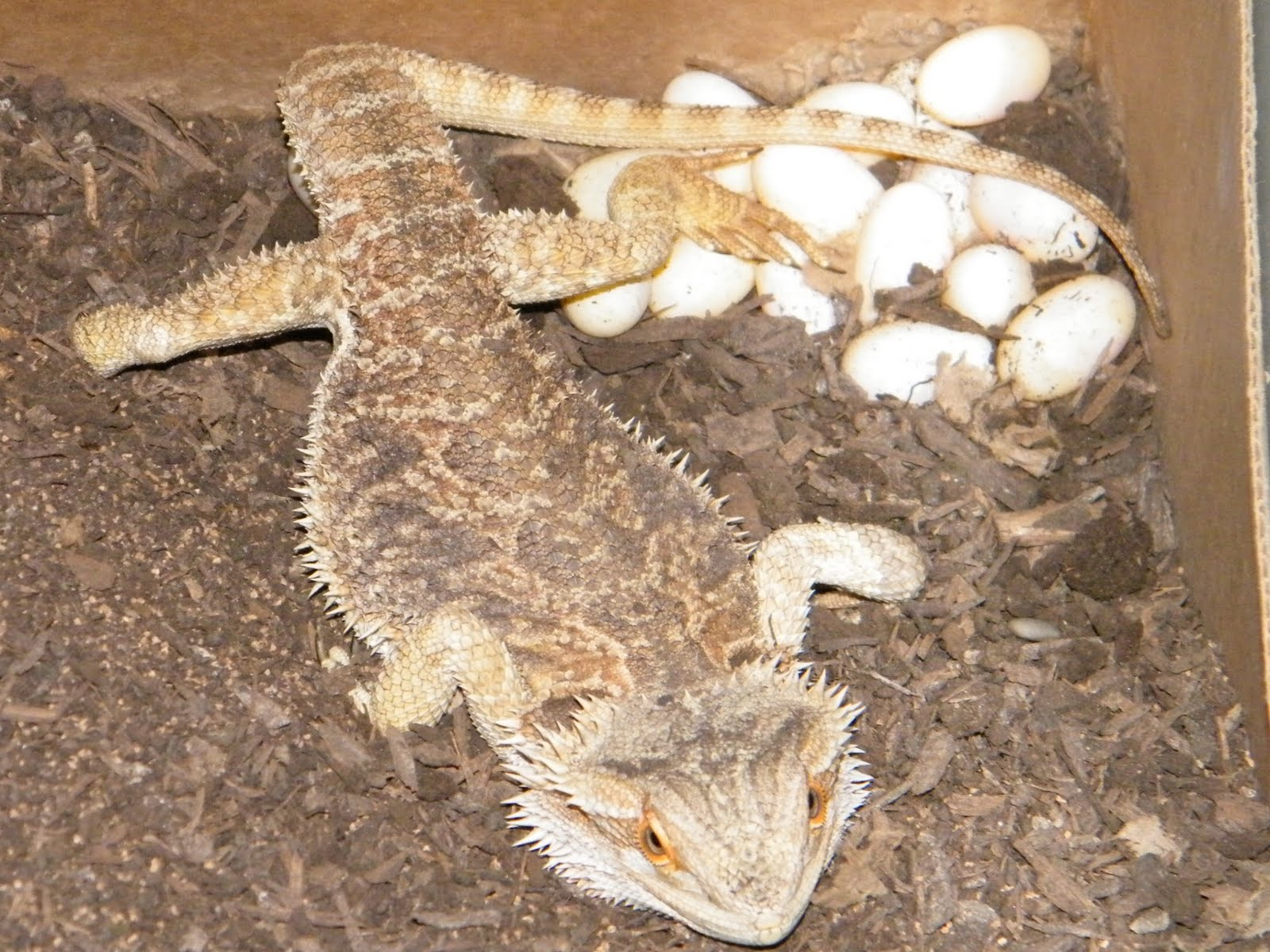 Reptiles That Lay Eggs Welcome to Ms. Clemons...