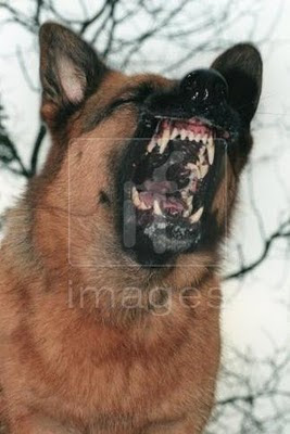 Download How to handle an Overly Aggressive German Shepherd Dog