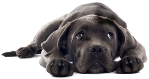 Obsessive Compulsive Disorders Dogs, OCD Dogs