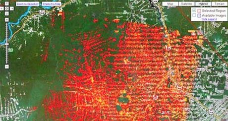 Google x Monitoramento Florestas