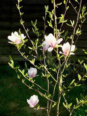 Der Garten Ist Nicht Mehr Attraktiv. Nur Noch Aufräumen Ist Erforderlich  Und Das Unkraut Wächst Kaum Noch. Man Schiebt Deshalb Den Garten Und Die  Arbeit ...