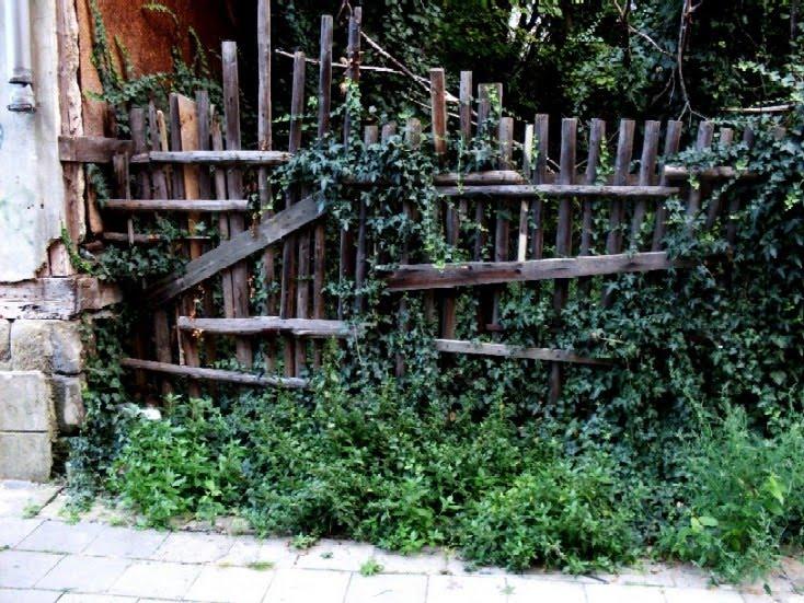 Gartenarbeit Ideen: Unkraut / Begrünung hässlicher Flächen ...