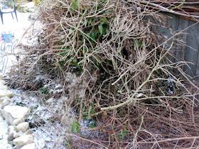 Garten-anders: Dezember 2009 Gartnern Im Herbst Den Garten Fur Die Wintertagen Vorbereiten