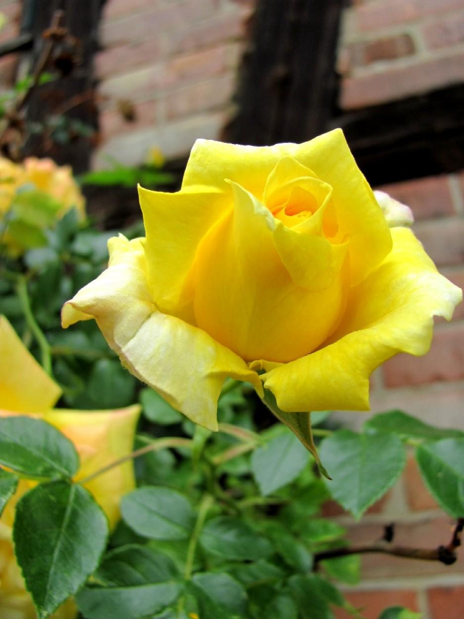 Kies Me Baby Aus Der Reihe Kies Garten Gelb