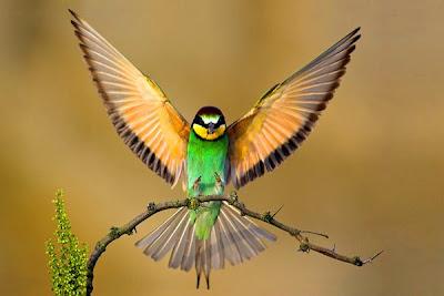 the Birds Splash of Colors