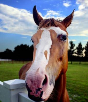 Horse Head Hidden Object Illusion