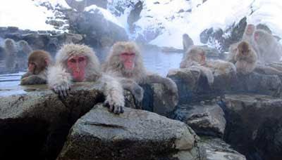 Jigokudani Hot Springs<br />
