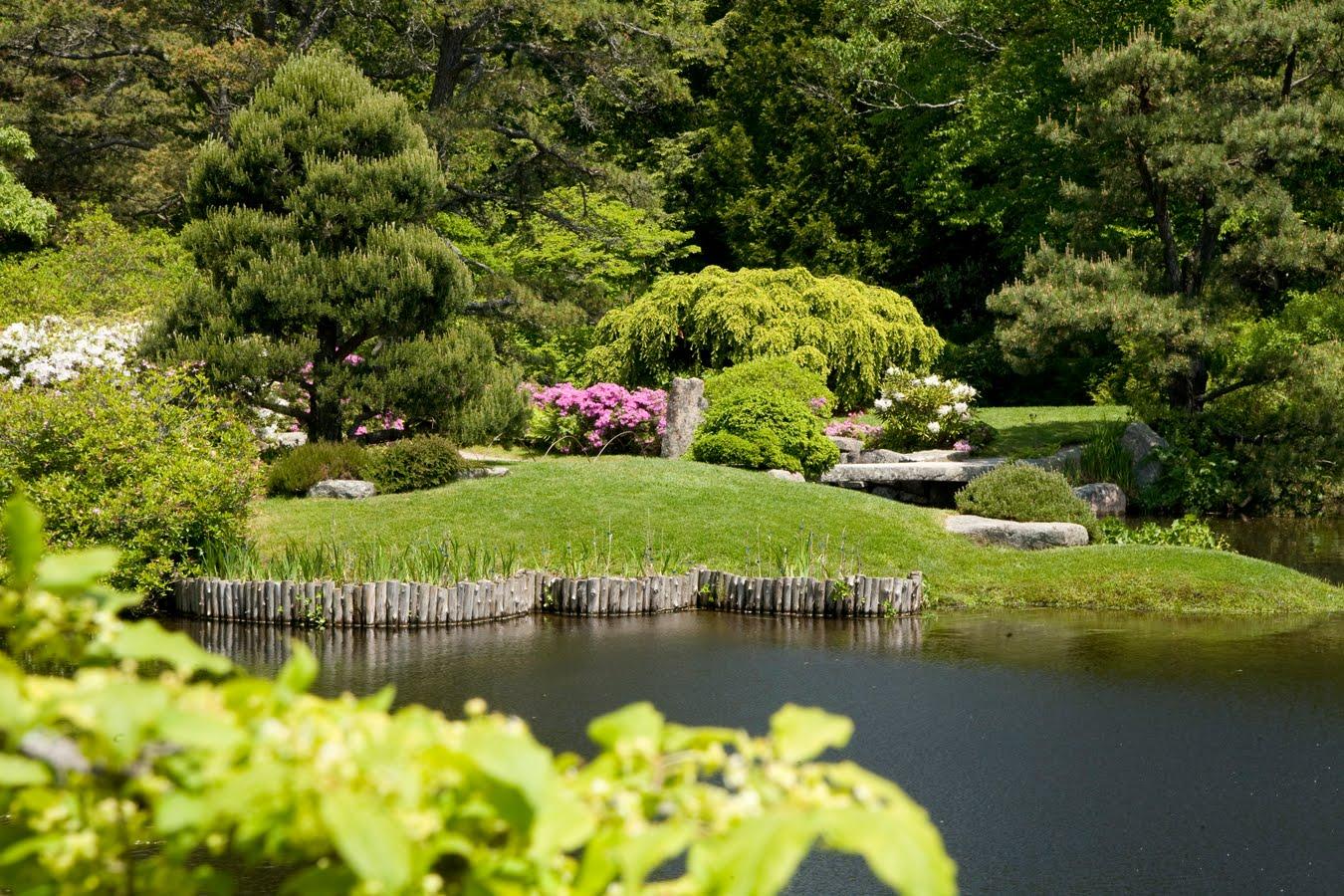 Maine Buzz Asticou Azalea Garden