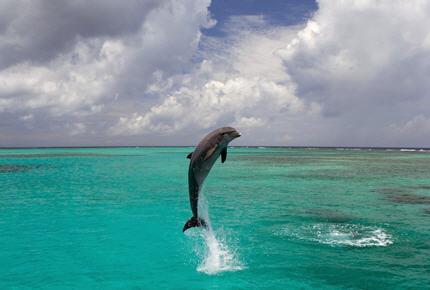 Des billets et des saisons indices d 39 eau for Nager avec les dauphins nice