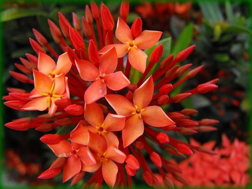 15 The 15 Most Beautiful Flowers In The World