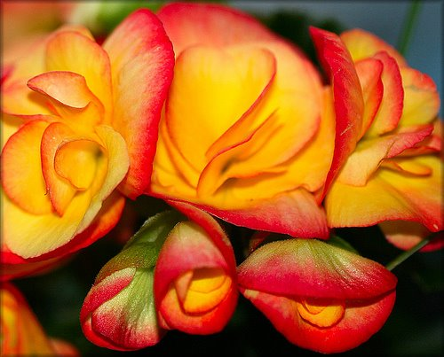 14 The 15 Most Beautiful Flowers In The World
