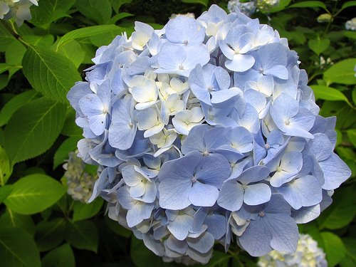 4 The 15 Most Beautiful Flowers In The World