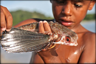 foto bocah lagi mainan dengan ikan terbang yang gotong royong Inilah Foto Asli Dari Ikan Terbang