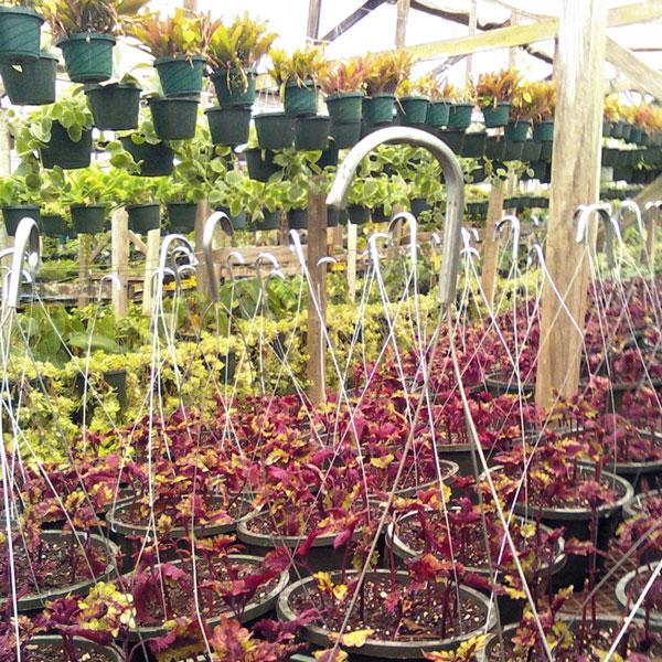 The Rainforest Garden Epiphytic Cactus Nursery Holiday S Landscaping Jacksonville Fl Home