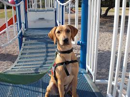 TSA Puppy #2