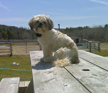 Just Hangin out on the Picnic Table