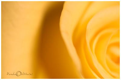 Raggi gialli
