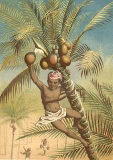 Kokos Palme
